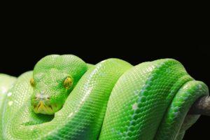 Python 3.8 Changements importants !